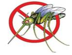 Лихорадка Западного Нила – будьте осторожны!